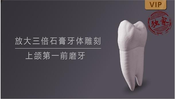 图片 放大三倍石膏牙体雕刻 上颌第一前磨牙