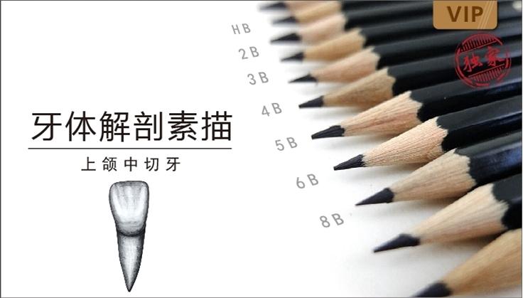 图片 牙体解剖素描-上颌中切牙
