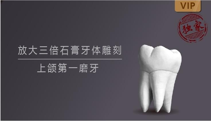 图片 放大三倍石膏牙体雕刻 上颌第一磨牙